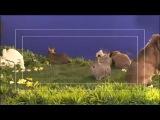 Как снимают фильмы для взрослых кроликов